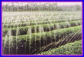 供应蔬菜用喷灌/双层喷灌