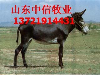 供应南昌肉驴养殖场萍乡肉驴养殖场批发