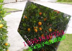 外墙瓷砖图片 外墙瓷砖样板图 外墙瓷砖泛碱清洁剂 深圳市高清图片