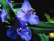 供应批发零售各种花卉种子