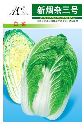 黄心包头大白菜新烟杂三号白菜种子大白菜种子 蔬菜种子选择 口感好大白菜