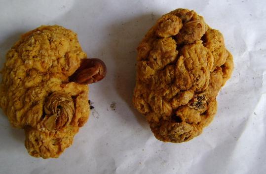 最常见的补肾食物 - 红杏妹--红杏妹