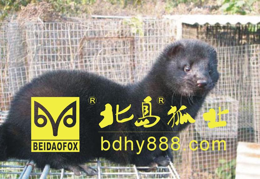 光盘动物手工图片