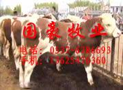 供应牛羊信息