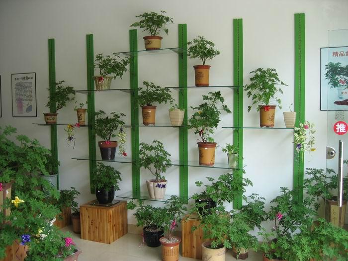供应植物装饰图片