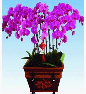 室内花卉年宵花图片_室内花卉年宵花图片大全