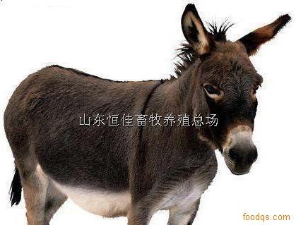 供应肉驴种驴批发