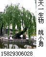 供应水杨甙SALICIN