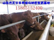 供应肉牛养殖业肉羊养殖业畜牧开发