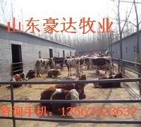 供应养牛的草料的配方