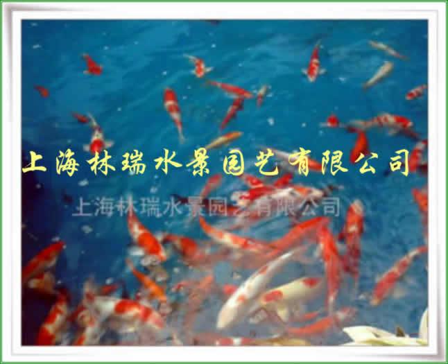 供应观赏鱼池水净化设备图片