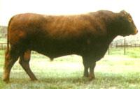 牛羊万头养殖基地