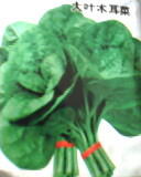 木耳菜种子
