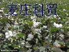 棉籽价格表