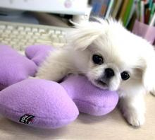 供应宠物玩具
