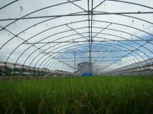 供应农用大棚
