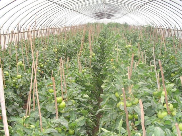 绿色蔬菜睁图片_绿色蔬菜睁图片大全_绿色蔬菜睁图库
