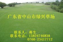 供应高尔夫球草