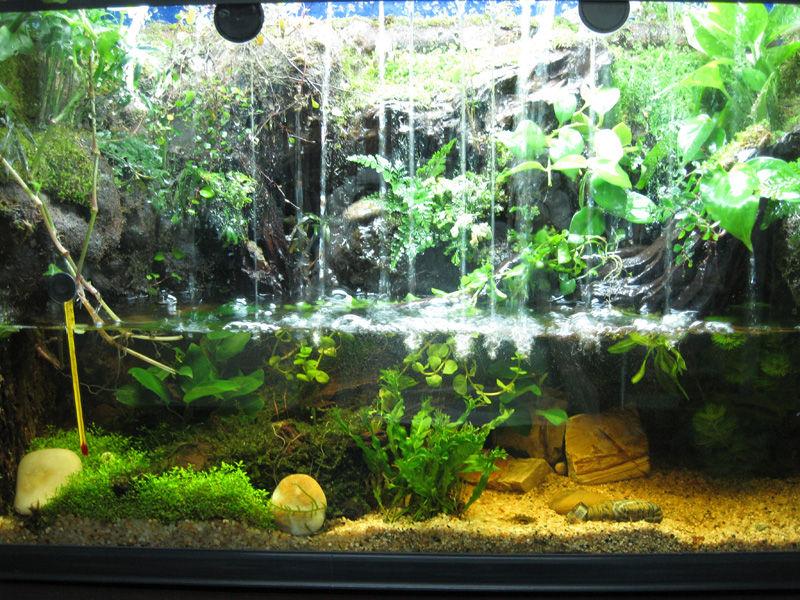 生态鱼缸图片