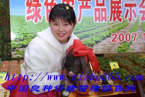 江苏省新天地牧业良种仔猪繁殖中心
