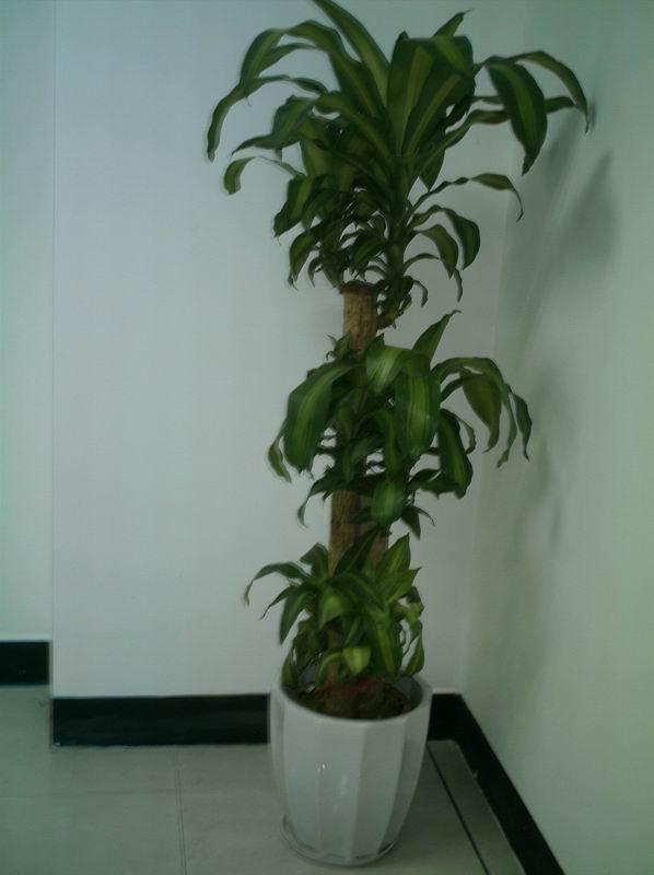 办公室室内绿化图片