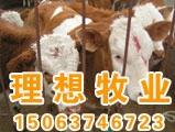 供应牛羊网批发