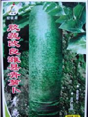 胶蔬改良潍县青萝卜种子图片/胶蔬改良潍县青萝卜种子样板图