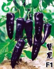 供应紫色辣椒种子