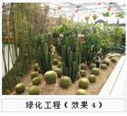 供应绿化工程7