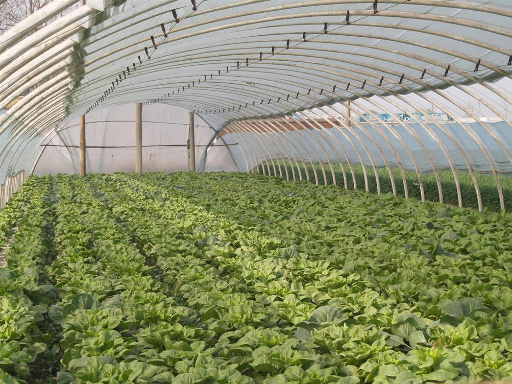 壁纸 成片种植 风景 植物 种植基地 桌面 1003_752
