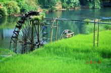 供应各种绿化工程