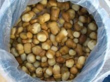 供应盐渍牛肝菌