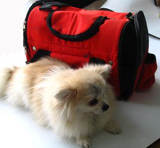 供应韩版流行宠物包,外贸品质
