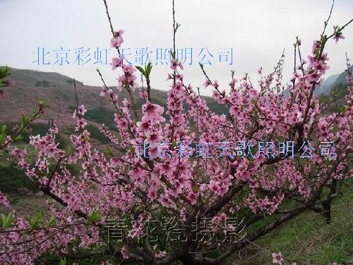 供应北京春节桃花树制作
