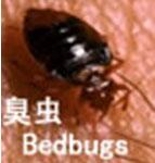 供应臭虫防治害虫治理