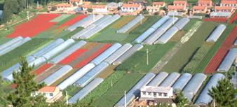赤峰锦绣花卉种子培育基地