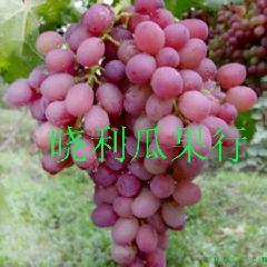 供应陕西红提葡萄,阿不等水果