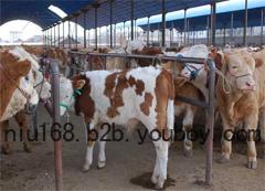洛阳黄牛交易市场