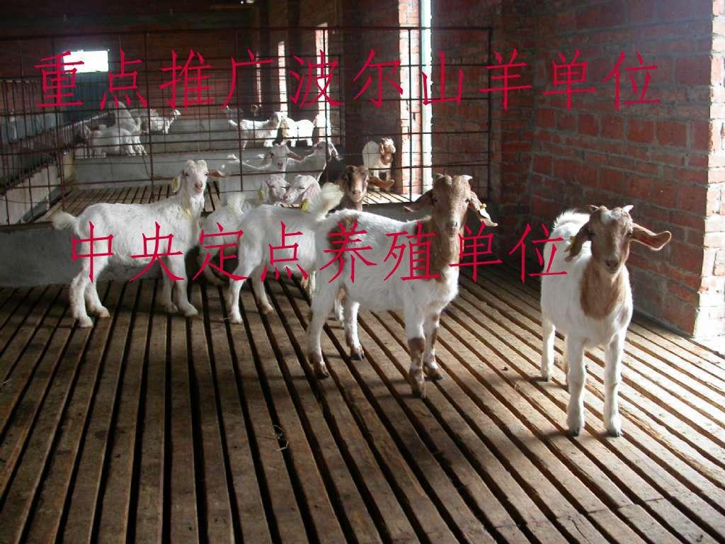 供应畜牧养殖业牛羊驴良种致富帮手江西畜牧业