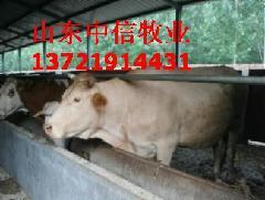 供应牛舍建设图纸养牛厂的建造牛棚建设