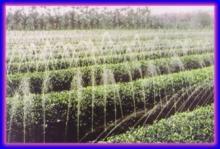 供应山东喷灌带